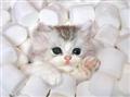 Kitten Central