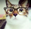 Smart Cat Facts